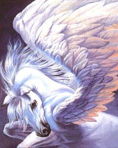 Wings by Sue Dawe